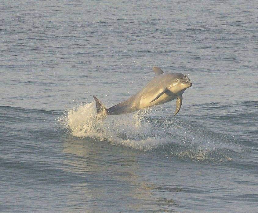 delfin saltando fotografiado por Yasmin