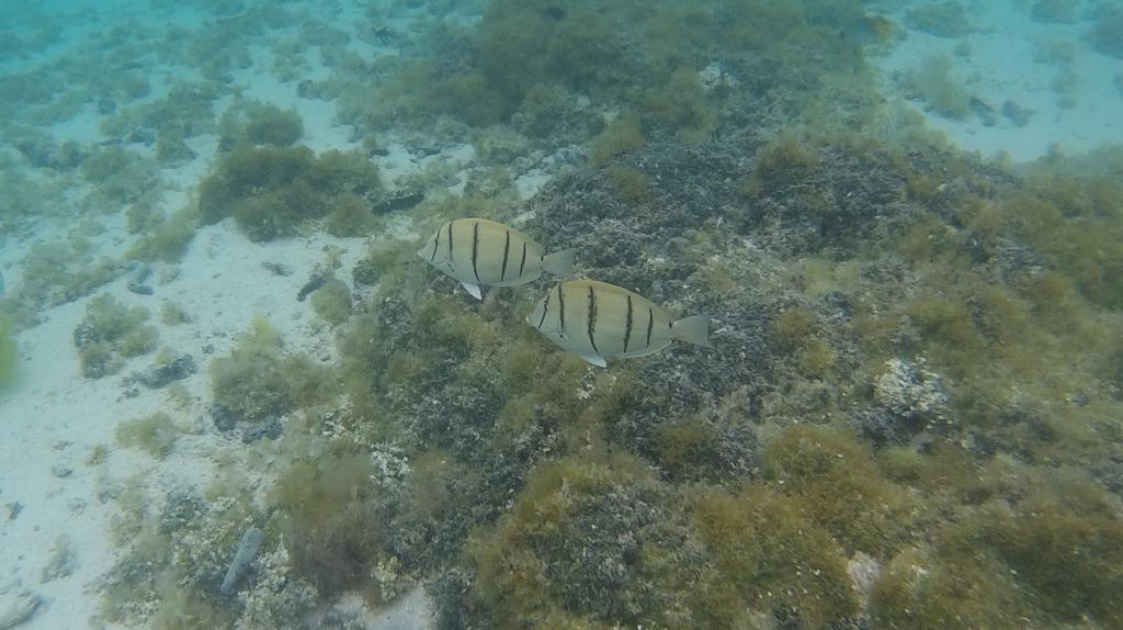 Nuestra misión. Cuidado de la fauna marina