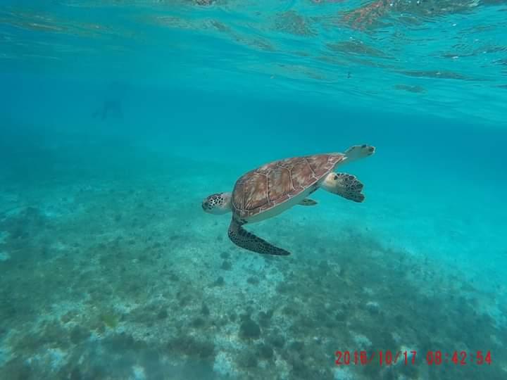 Tortuga marina. Los océanos son los pulmones del mundo.